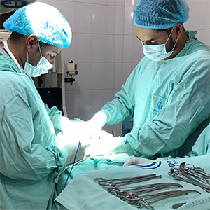 трансплантация яичка у мужчин